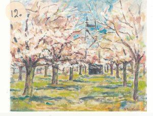 Bloeiende kersenboomgaard in Meteren